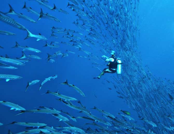 Diving thailand association des guides francophone de thailande ttn thailand travel news - Where to dive in thailand ...
